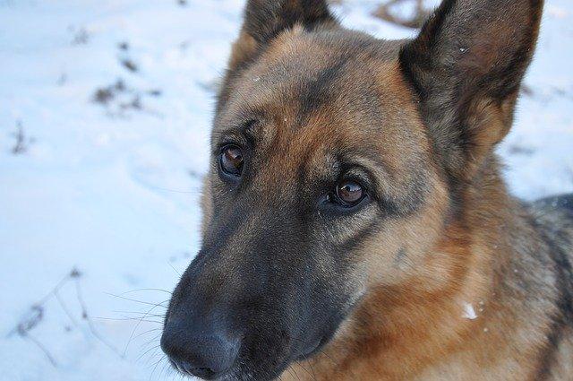 Hundehalter aufgepasst ! Staupe in NRW !